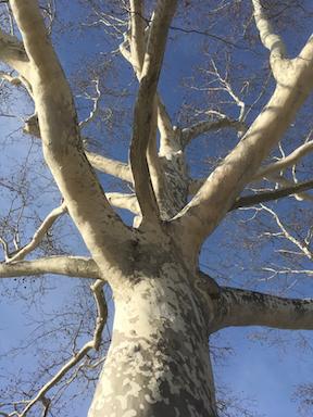 white tree on blue sky