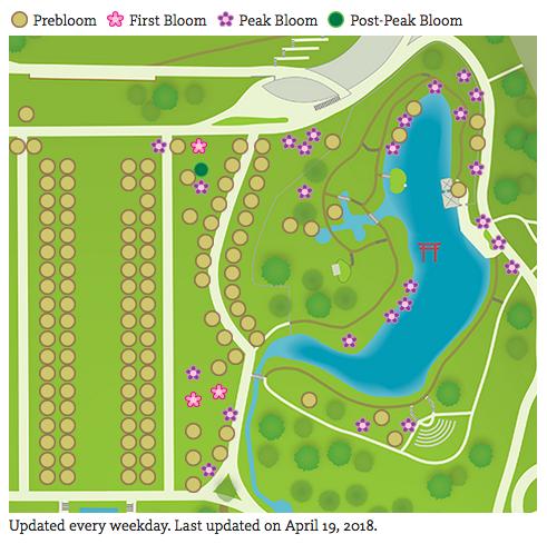 Brooklyn Botanic Garden Cherry esplanade not yet in bloom