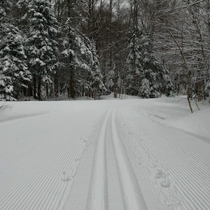 Corduroy and set tracks in the woods