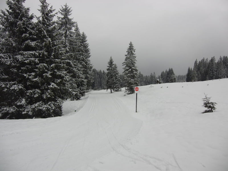 View of cross-country ski trail at Winklmoosalm