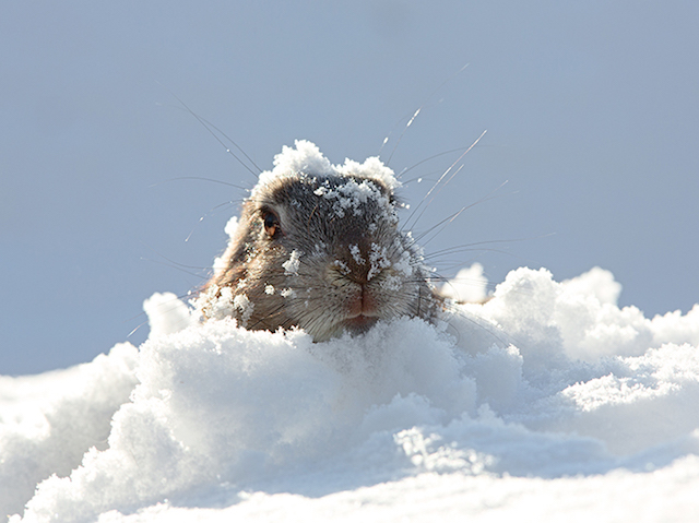 Groundhog in show